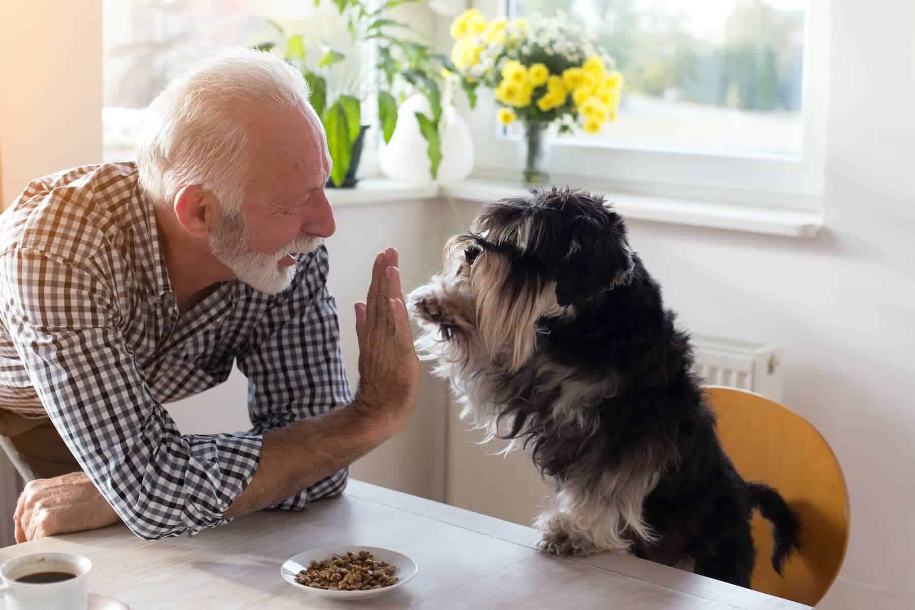 Slide_elderly person and dog doing high five_1800x1200C