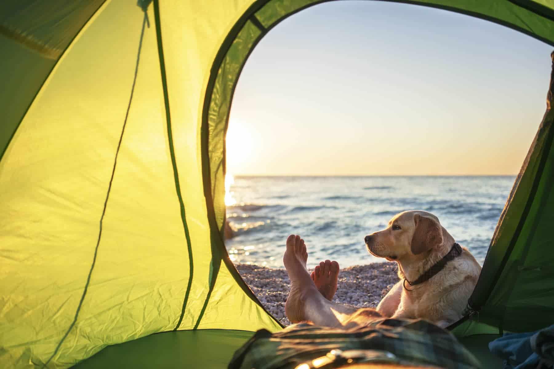 Slider_Dog in tent_1800x1200C