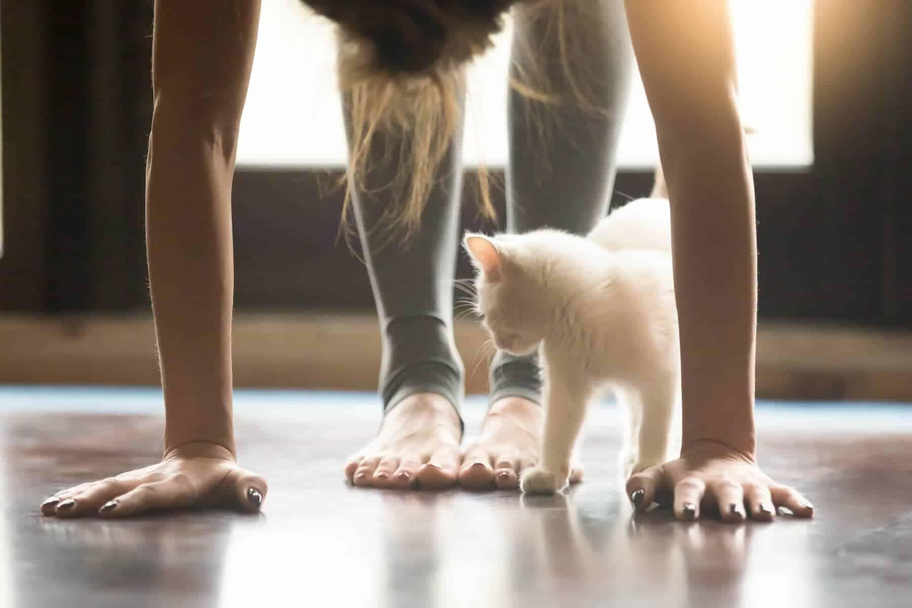 Slider_Yoga and cat_1800x1200C